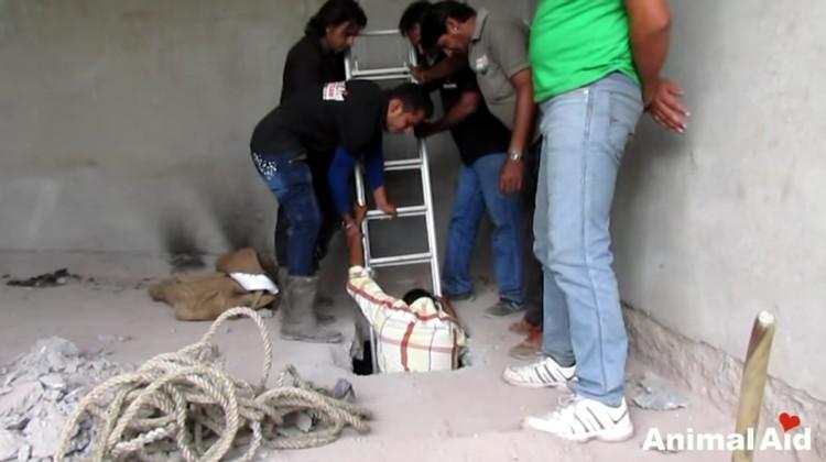 burro-cayo-pozo-salvataje-05