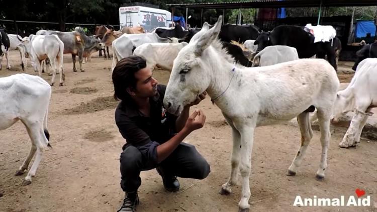 burro-cayo-pozo-salvataje-09
