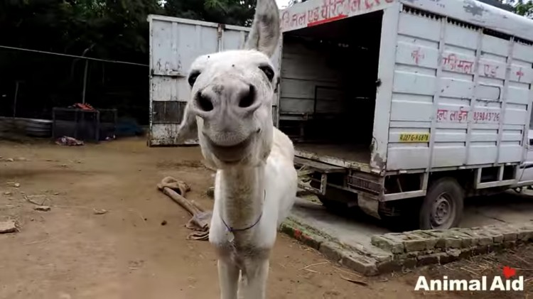 burro-cayo-pozo-salvataje-10