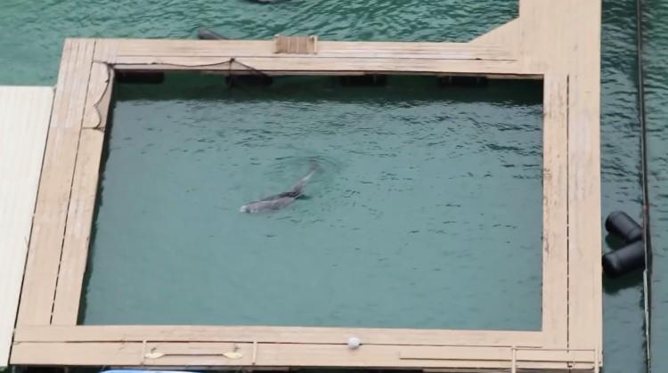 delfin-sin-ganas-de-vivir-japon-02