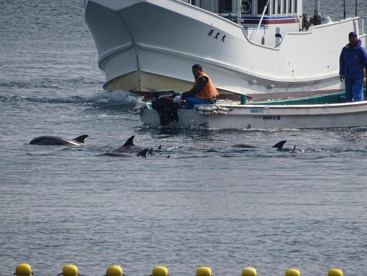 delfin-sin-ganas-de-vivir-japon-06
