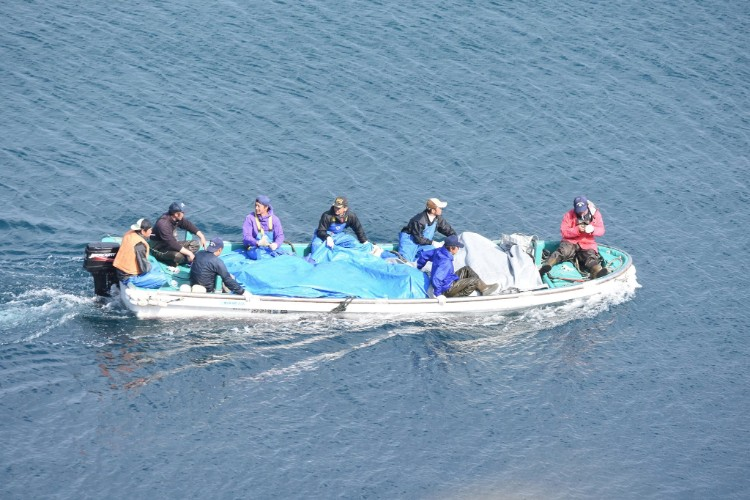 delfin-sin-ganas-de-vivir-japon-08