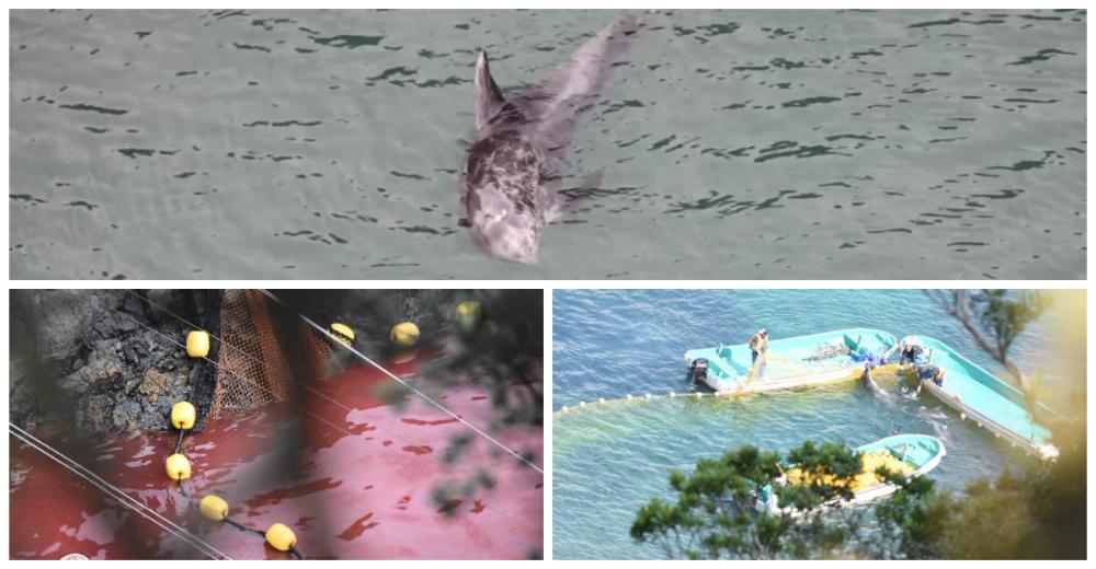 delfin-sin-ganas-de-vivir-japon-portada