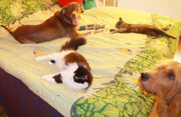 duke-perro-encadenado-a-remolque-en-bulgaria-rescatado-14