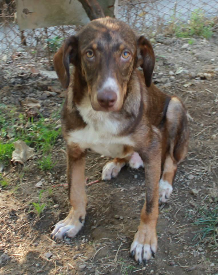duke-perro-encadenado-a-remolque-en-bulgaria-rescatado-16