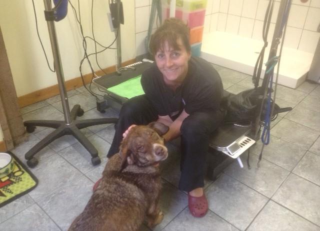 duke-perro-encadenado-a-remolque-en-bulgaria-rescatado-17