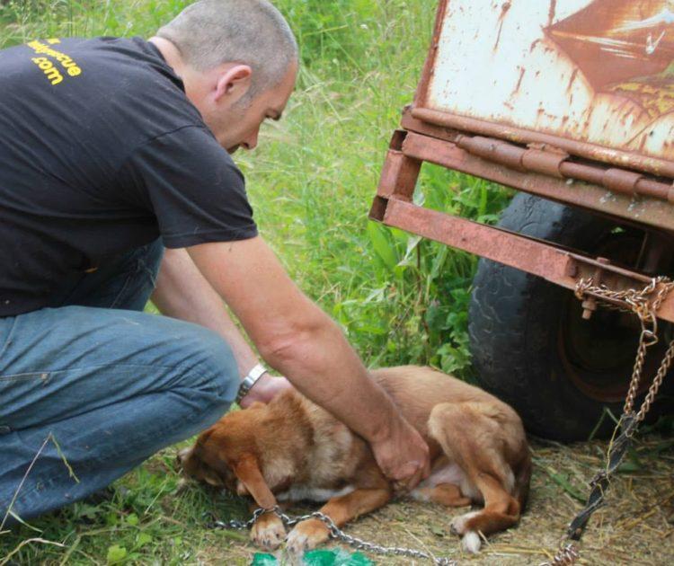 duke-perro-encadenado-a-remolque-en-bulgaria-rescatado-6