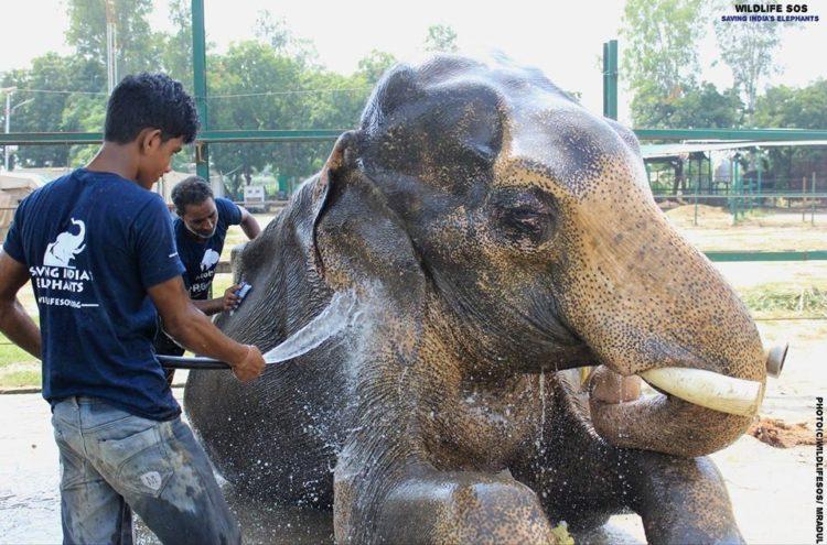 elefane-liberado-10