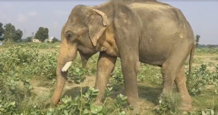elefane-liberado-13