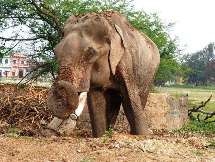 elefane-liberado-4