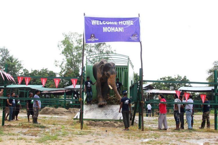 elefane-liberado-5