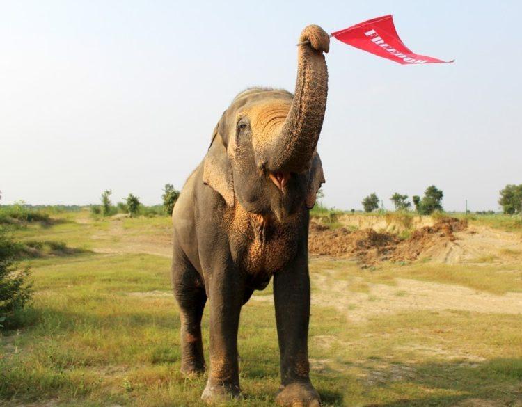 elefane-liberado-6