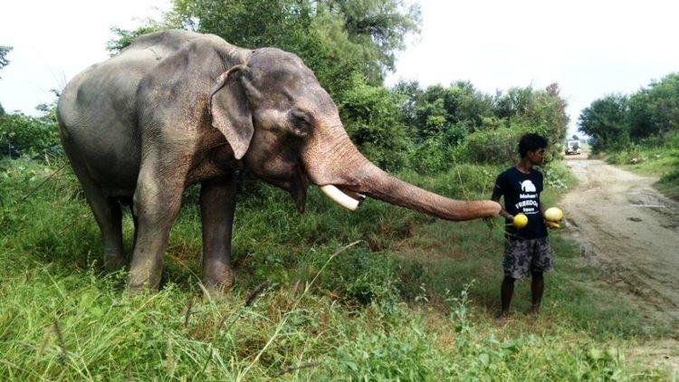 elefane-liberado-8