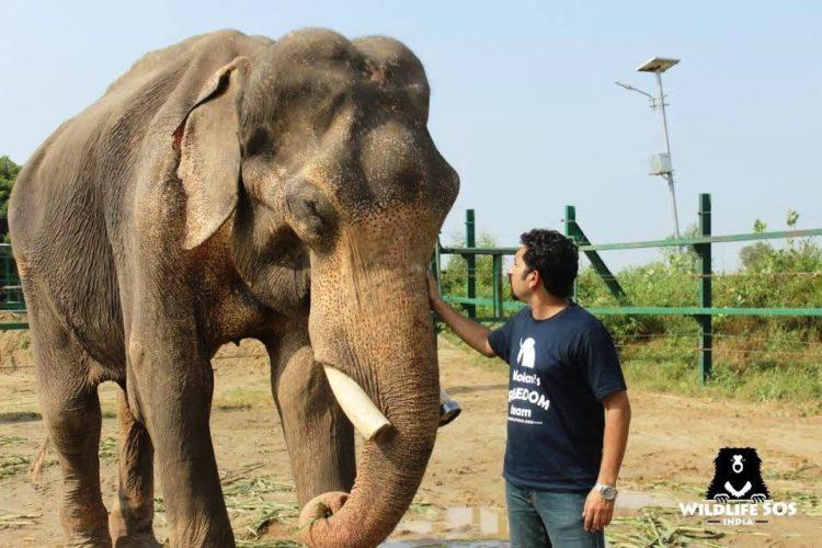 elefane-liberado-9