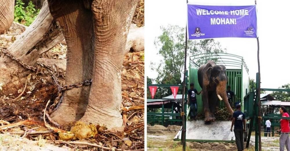 elefane-liberado-portada