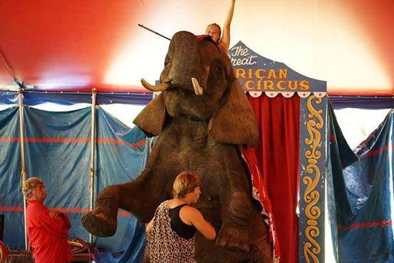 elefante-de-circo-1