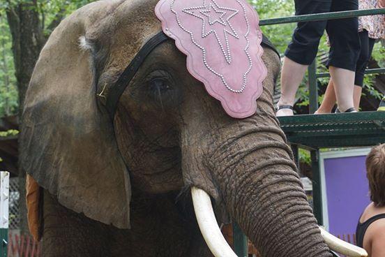elefante-de-circo-2