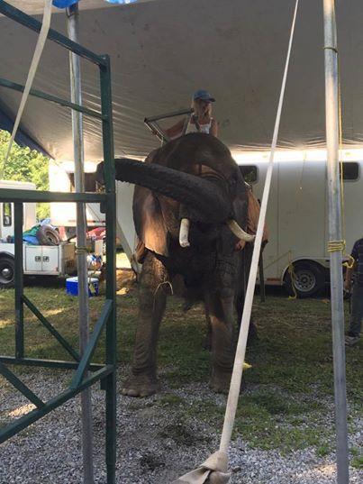 elefante-de-circo-3