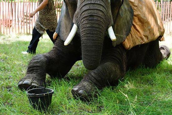 elefante-de-circo-4