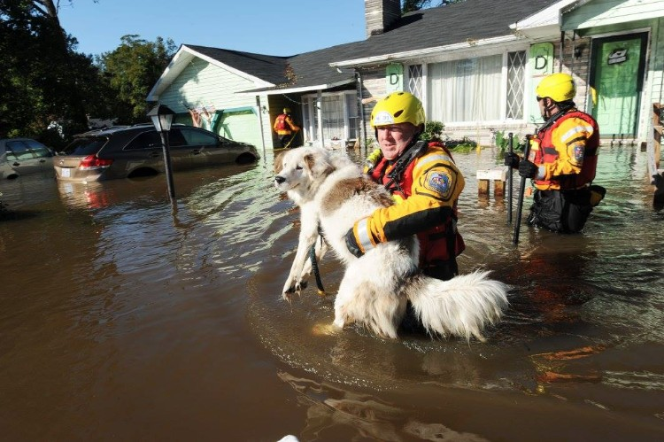fema-huracan-matthew-rescate-mascotas-01