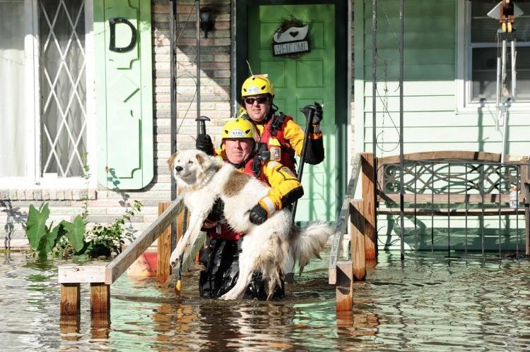 fema-huracan-matthew-rescate-mascotas-02