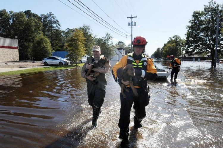 fema-huracan-matthew-rescate-mascotas-05
