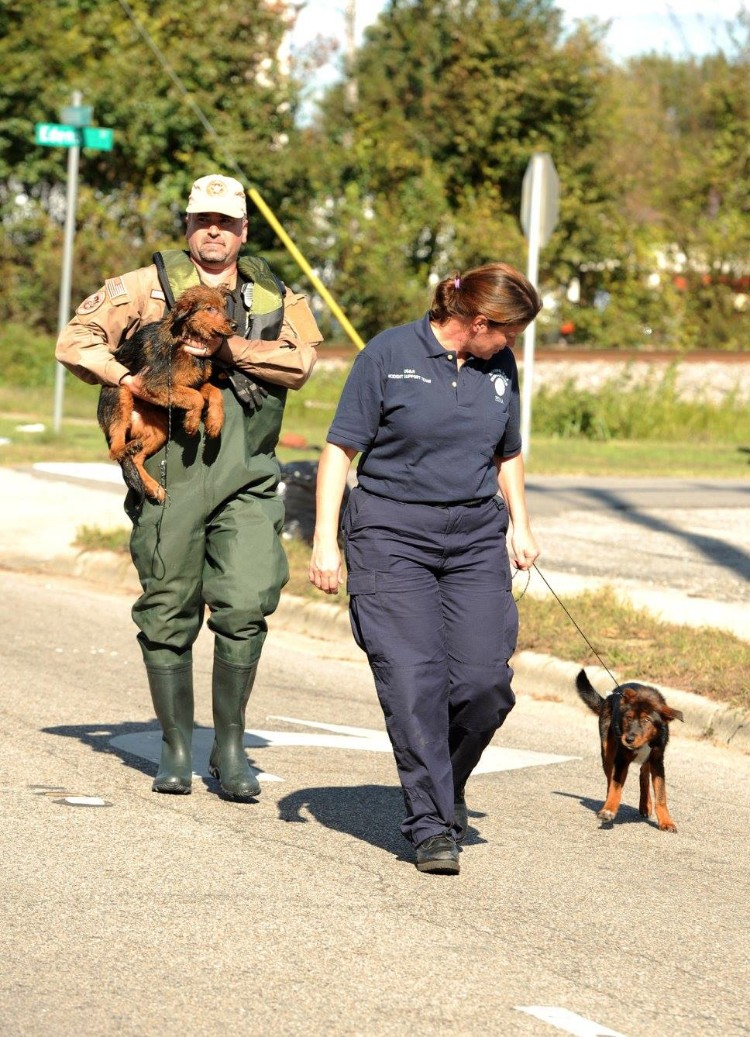fema-huracan-matthew-rescate-mascotas-06
