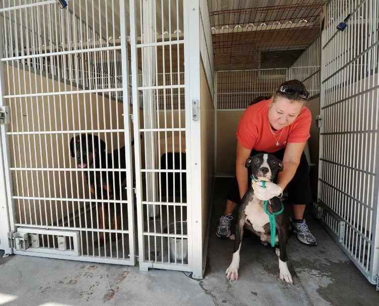 fema-huracan-matthew-rescate-mascotas-09