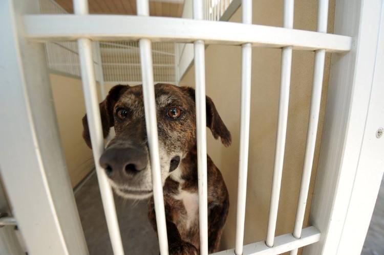 fema-huracan-matthew-rescate-mascotas-11