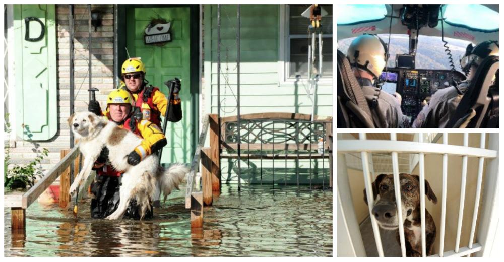fema-huracan-matthew-rescate-mascotas-portada