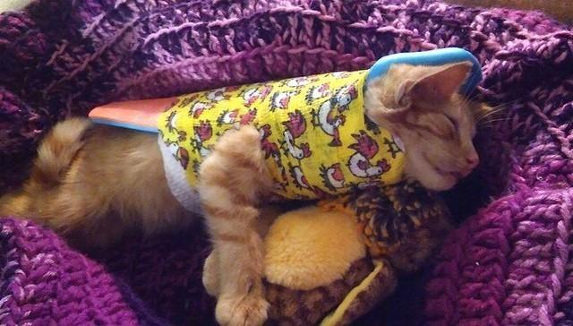 gatito-encontrado-en-la-calle-con-la-espalda-rota-con-ayuda-y-amor-se-recupera-y-vuelve-a-saltar-1