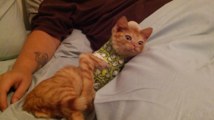 gatito-encontrado-en-la-calle-con-la-espalda-rota-con-ayuda-y-amor-se-recupera-y-vuelve-a-saltar-3