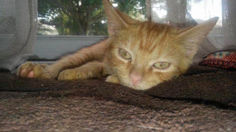 gatito-encontrado-en-la-calle-con-la-espalda-rota-con-ayuda-y-amor-se-recupera-y-vuelve-a-saltar-7