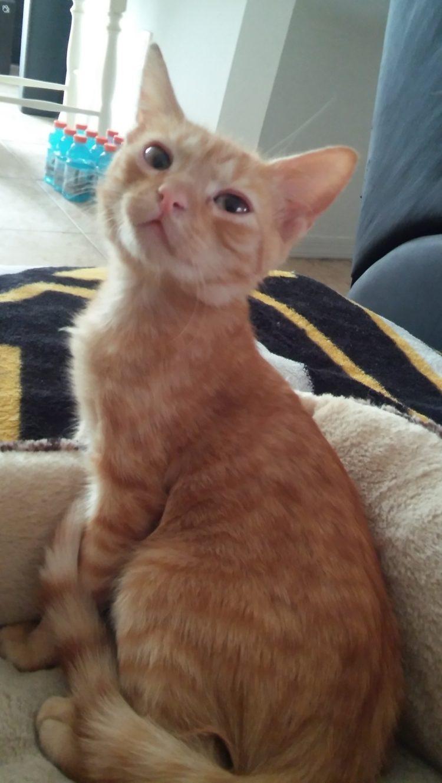 gatito-encontrado-en-la-calle-con-la-espalda-rota-con-ayuda-y-amor-se-recupera-y-vuelve-a-saltar-8