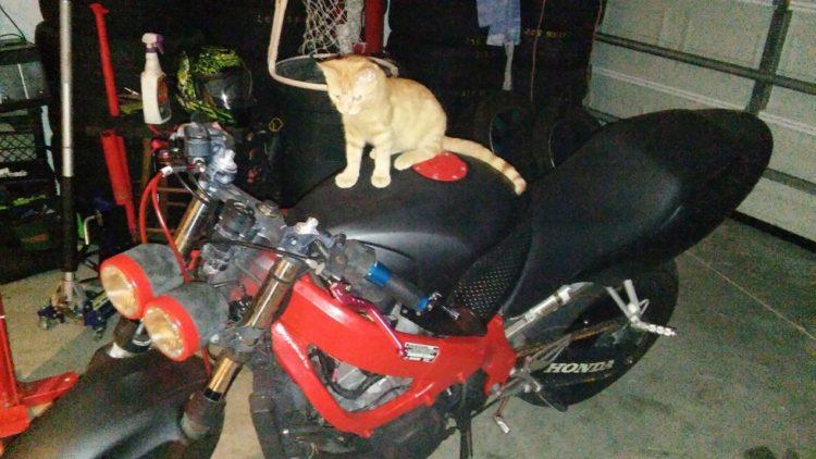 gatito-encontrado-en-la-calle-con-la-espalda-rota-con-ayuda-y-amor-se-recupera-y-vuelve-a-saltar-9