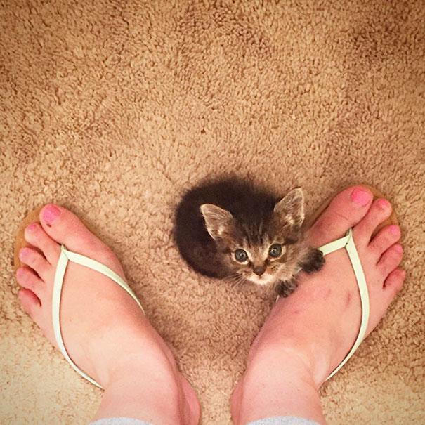 gatito-huerfano-desde-que-nacio-1
