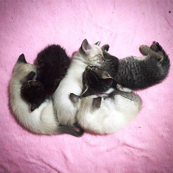 gatito-huerfano-desde-que-nacio-10