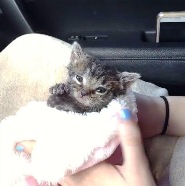 gatito-huerfano-desde-que-nacio-2