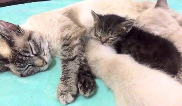 gatito-huerfano-desde-que-nacio-4