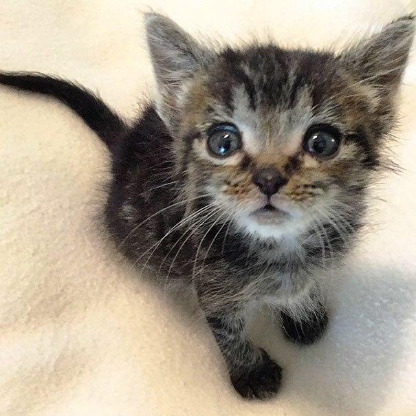 gatito-huerfano-desde-que-nacio-9