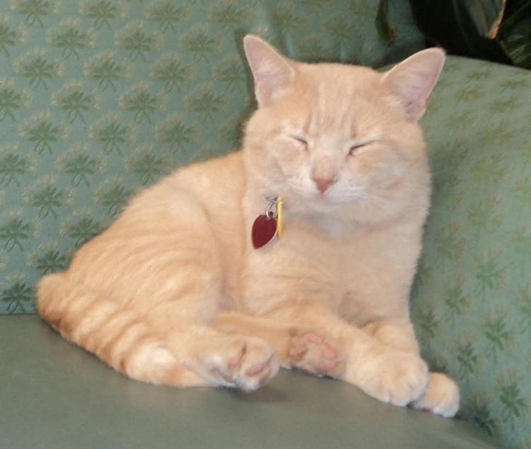 gato-estira-su-pata-para-tocar-la-mano-del-veterano-que-estaba-muriendo-1