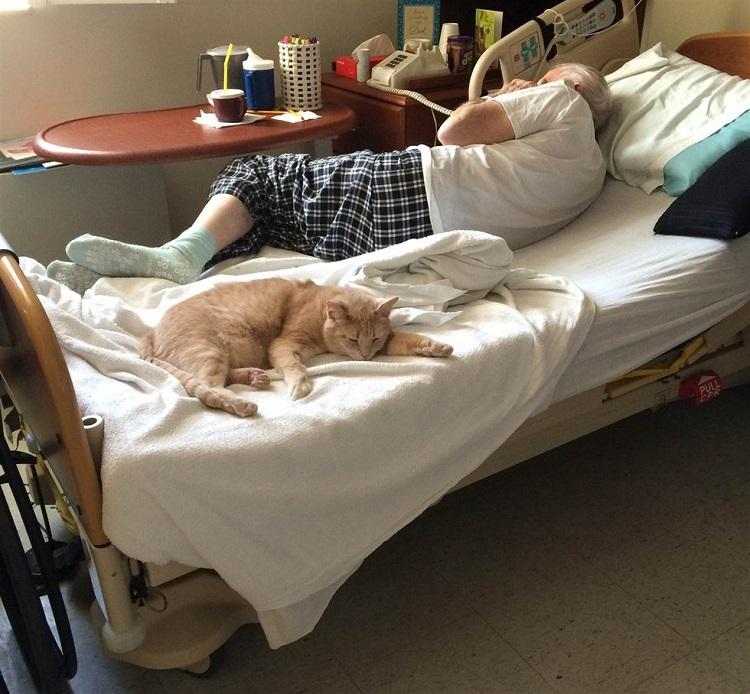 gato-estira-su-pata-para-tocar-la-mano-del-veterano-que-estaba-muriendo-3