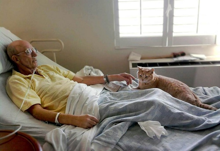 gato-estira-su-pata-para-tocar-la-mano-del-veterano-que-estaba-muriendo-5