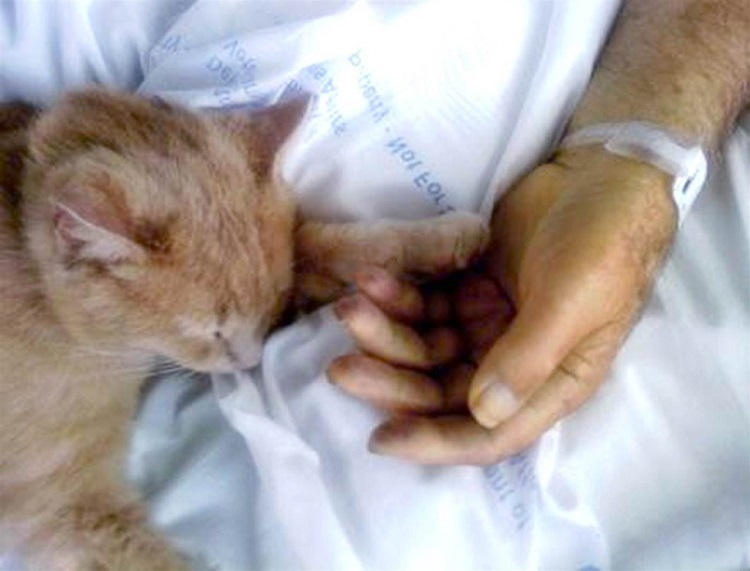 gato-estira-su-pata-para-tocar-la-mano-del-veterano-que-estaba-muriendo-6