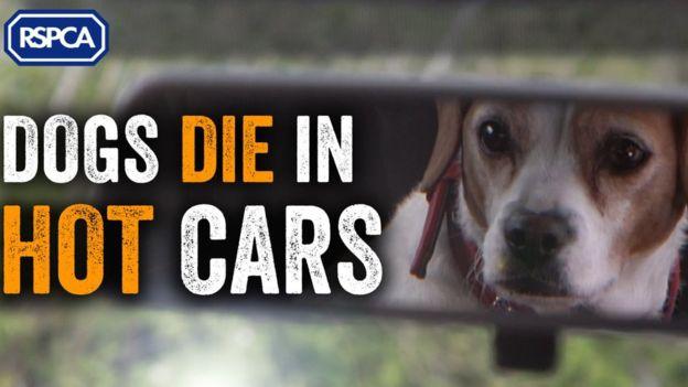 hombre-de-65-anos-acusado-de-dejar-sus-tres-perros-en-el-auto-murieron-exposisicion-al-calor-8