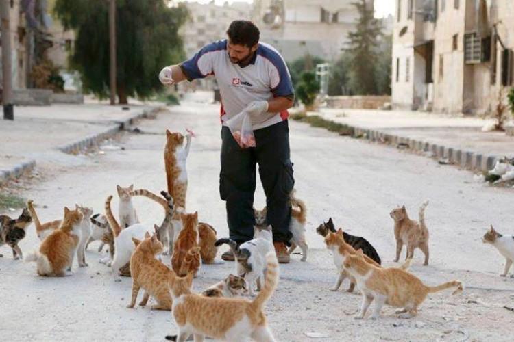 hombre-gato-aleppo-siria-01