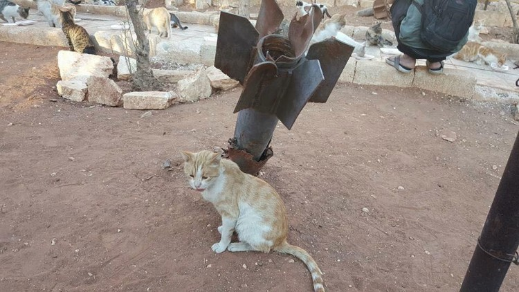 hombre-gato-aleppo-siria-06