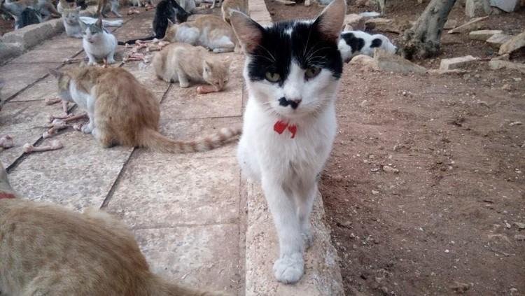hombre-gato-aleppo-siria-09