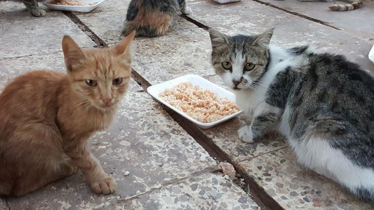 hombre-gato-aleppo-siria-10