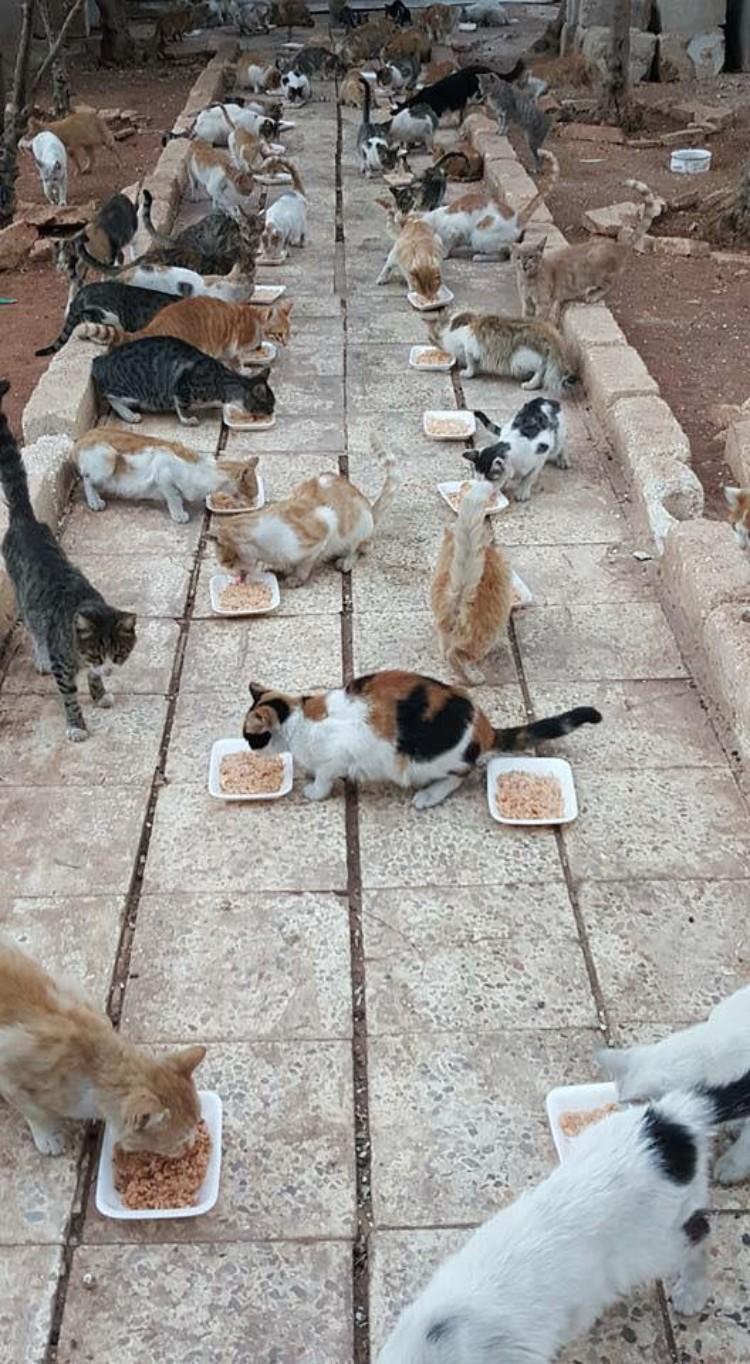 hombre-gato-aleppo-siria-11
